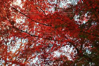 近くの木のアップの写真・画像素材[1611916]