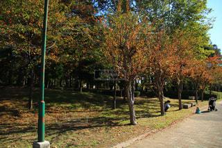 公園の木の写真・画像素材[1617321]