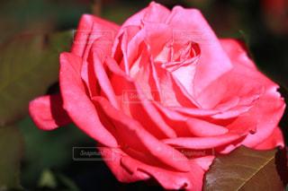 近くの花のアップの写真・画像素材[1617378]