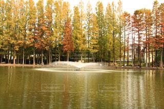 近くに池のアップの写真・画像素材[1625796]