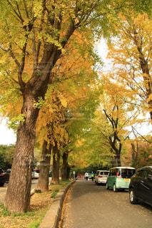 木の隣に道の端に駐車していた車の写真・画像素材[1625811]