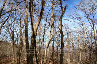 フォレスト内のツリーの写真・画像素材[1820640]