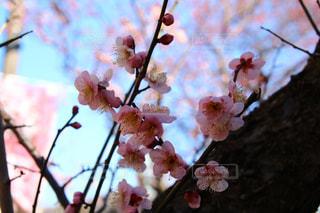 木の枝に花の花瓶の写真・画像素材[1820848]
