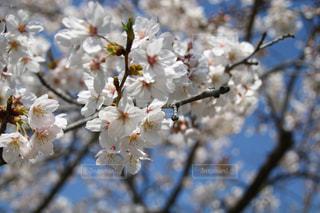 春,桜,お花見,フォトジェニック,インスタ映え
