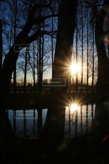 水の体の横にあるツリーの写真・画像素材[1875501]