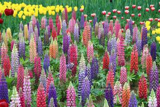 花の写真・画像素材[2062781]