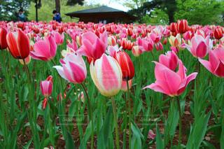 花の写真・画像素材[2062820]