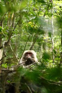 猿の写真・画像素材[2237913]