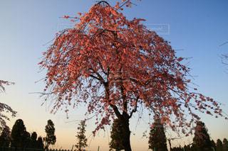 大きな木の写真・画像素材[3040349]