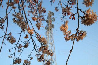 空,公園,花,春,桜,樹木,埼玉県,さいたま市