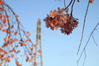 空,花,春,桜,樹木,ピンク色,埼玉県,桜の花,さいたま市