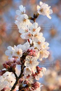 花のクローズアップの写真・画像素材[3040351]