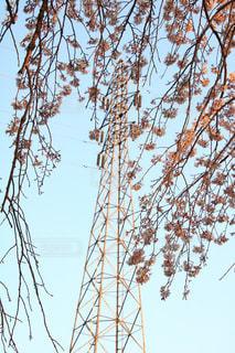 空,公園,春,桜,樹木,埼玉県,桜の花,さいたま市