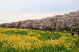 緑豊かな畑に立っている人の写真・画像素材[3043363]