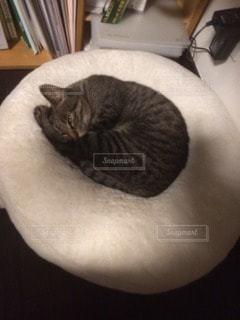 猫の写真・画像素材[15456]