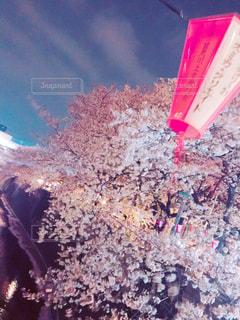 花,桜,目黒川,花絶景