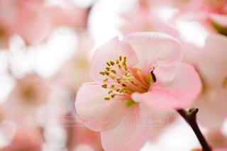 春の写真・画像素材[401677]