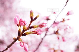 春 - No.403006