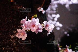 春の写真・画像素材[403010]