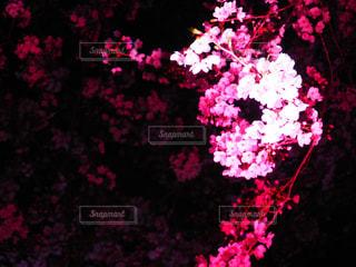 春の写真・画像素材[426893]