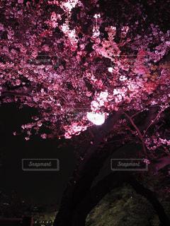 春の写真・画像素材[426895]