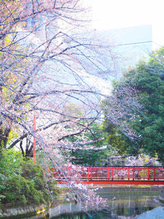 春 - No.428083
