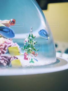 水族館,クリスマス,休日,デート,Christmas,Xmas