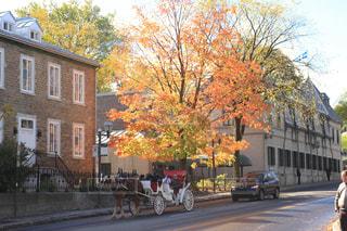 秋,紅葉,馬車,カナダ,秋空,ケベック