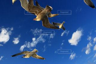 空を飛んでいる鳥の写真・画像素材[1124208]