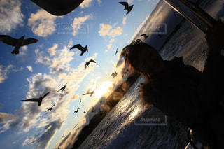 空を飛んでいるカモメの群れの写真・画像素材[1124229]