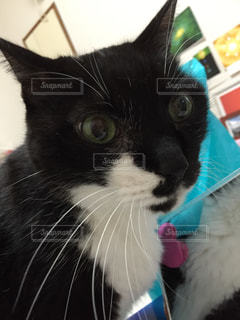 猫の写真・画像素材[315068]