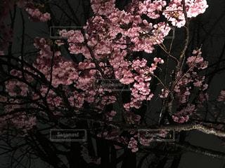 春の写真・画像素材[406229]