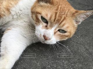 猫,かわいい,ねこ,お昼寝,眠い,目,め,ネコ,おひるね