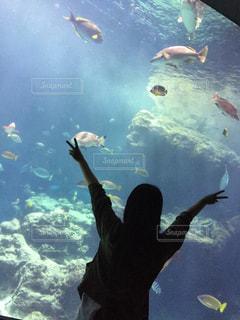 海,水族館,沖縄,美ら海水族館,ハンドサイン,ジェスチャー