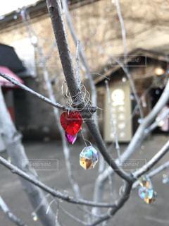 Heartの写真・画像素材[1249994]