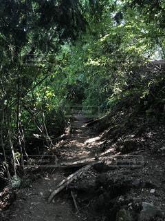 高尾山の写真・画像素材[1406402]