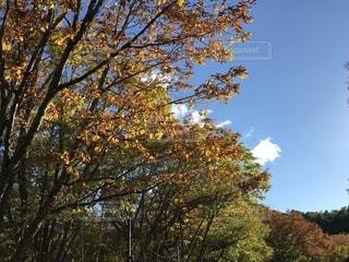 秋,紅葉,赤,葉っぱ,黄色,観光地,もみじ,日光,季節,景色,観光,旅行,旅,japan,栃木,色,四季,中宮祠