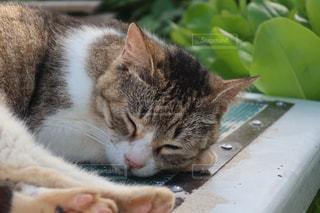 猫,動物,かわいい,ペット,人物,ネコ
