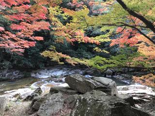 背景の木と岩が多い山の写真・画像素材[883150]