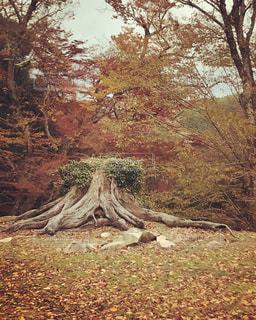 森の中の木の写真・画像素材[883215]