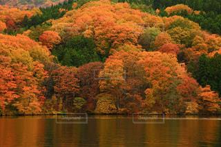 木々 に囲まれた水の大きな体の写真・画像素材[851761]