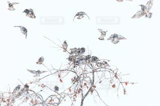 空を飛んでいる鳥の群れの写真・画像素材[1751879]