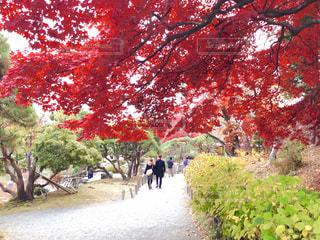 紅葉する公園を散歩の写真・画像素材[842135]