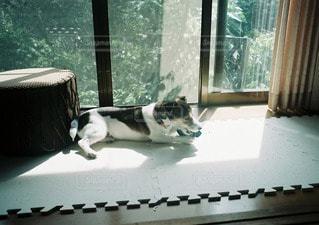 犬の写真・画像素材[11324]