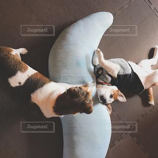 犬の写真・画像素材[299013]