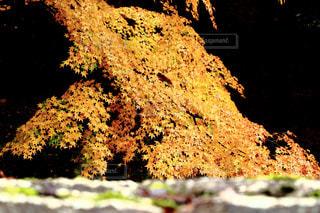 自然の写真・画像素材[606356]
