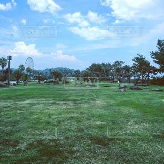 背景の木と大規模なグリーン フィールド - No.708259