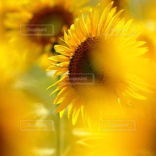 近くの花のアップの写真・画像素材[708324]