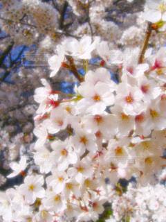 春の写真・画像素材[402648]