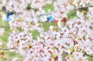 花の写真・画像素材[428090]